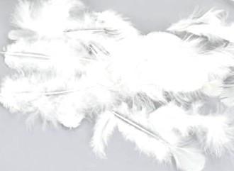 Madártoll 6-7cm, 10g, kb.100-150db, 4 színben 7733C